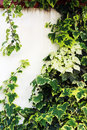 Overgrown wall Royalty Free Stock Photo