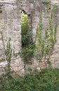 Overgrown wall of the hochburg emmendingen and window detail in southern germany Stock Image