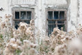 Overgrown weeds window of an old house in arkhangelsk russia Stock Photography