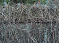 Overgrown wooden fence old dusty photo Stock Photos
