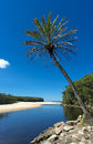 Overhanging palm tree at the beach a solitary in royal national park sydney australia Royalty Free Stock Photos