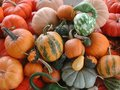 stock image of  Overhead photo of pumpkins and gourds