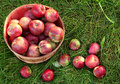 Overhead shot of a basket of freshly picked apples Stock Photo