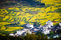 Overrall view of rural landscape in wuyuan county jiangxi province china with rape flowers all around taken Royalty Free Stock Images