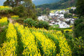 Overrall view of rural landscape in wuyuan county jiangxi province china with rape flowers all around taken Royalty Free Stock Image
