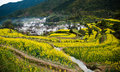 Overrall view of rural landscape in wuyuan county jiangxi province china with rape flowers all around taken Stock Images