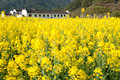 Overrall view of rural landscape in wuyuan county jiangxi province china with rape flowers all around taken Stock Image
