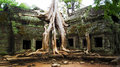 Ta Prohm Temple Siem Reap Cambodia- Ancient Angkor Royalty Free Stock Photo