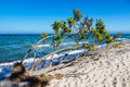 Overthrown tree on shore of the Baltic Sea Royalty Free Stock Photo
