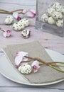 Ovos de codorniz da páscoa com cyklamen cor de rosa Imagens de Stock Royalty Free