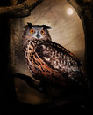 Royalty Free Stock Photos Owl