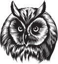 Owl bird head black and white style Royalty Free Stock Images