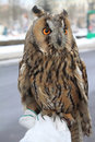 Owl In The Blurry Background