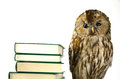 Owl at a book pile Royalty Free Stock Photo