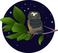 Owl on a branch vector illustration Stock Image
