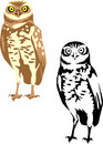 Owl burrowing athene cunicularia illustration Stock Image