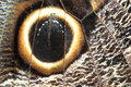 Owl butterly detail Royalty Free Stock Image