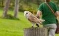An owl in captivity Royalty Free Stock Photo