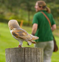An owl in captivity Royalty Free Stock Image