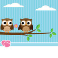 Owl couple Stock Photo