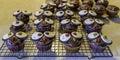 Owl cupcakes fresh homemade decorated like owls Stock Photos