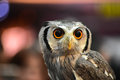Owl eyes. Owls portrait in the zoo Royalty Free Stock Photo