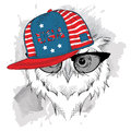Owl in the glasses, headphones and hip-hop hat with print of USA. Vector illustration.