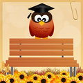 Owl graduate illustration of with parchment Royalty Free Stock Photos