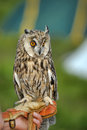 Owl on hand Royalty Free Stock Photo