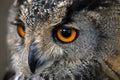Owl head closeup with huge orange eyes Stock Photos