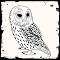 Owl illustration with black frame Stock Image