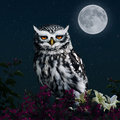 Owl in the light of the moon an on a fence with flowers is ilumanted by moonlight Stock Images