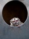 Owl monkey Royalty Free Stock Photo
