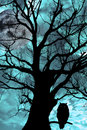Owl perched in ancient tree on moonlit night Royalty Free Stock Photography