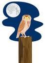 Owl perched on a post with moo Stock Image