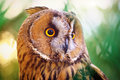 Owl portrait element of design Royalty Free Stock Image