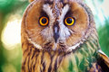 Owl portrait element of design Royalty Free Stock Photos