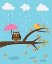 Owl in rainy season