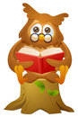 Owl - reading book while sitting Stock Images