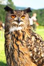 Owl s big interesting bird Royalty Free Stock Image