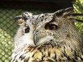 Owl s head in the cage photo made in the zoo of saint petersburg Stock Images