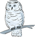 Owl sits on the branch Stock Photography