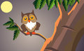 Owl sitting branch night Stock Photos