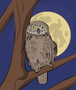 Owl sitting on tree branch at night hand drawn realistic illustration Stock Images