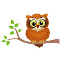 Owl sitting on a Tree Branch
