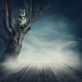 Owl sitting on the tree at night Stock Photos