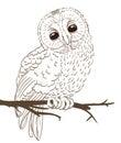 Owl sitting on a twig