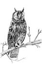 Owl sketch illustration a on tree Stock Image