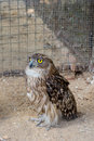 Owl in zoo wild cage Royalty Free Stock Photo