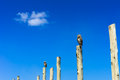 Owls on poles two with a blue sky an a cloud Stock Images